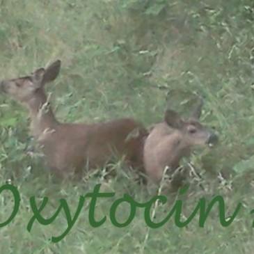 Oxytocin Acre